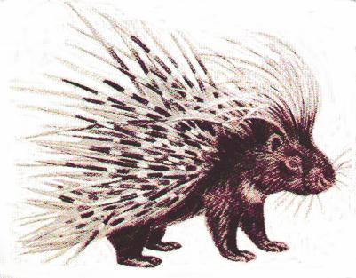 lot like porcupines—when